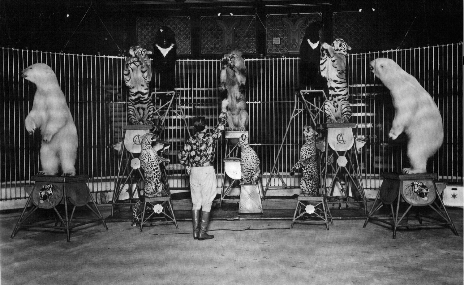 Blackpool Tower Elephants Act at Blackpool's Tower