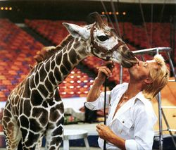 Gunther Gebel-Williams and giraffe.jpg