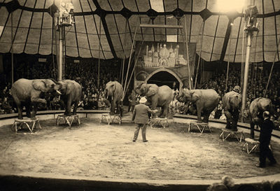 Rolf Knie and African elephants (1956).jpg